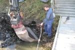 renovering-av-kompressor_1005